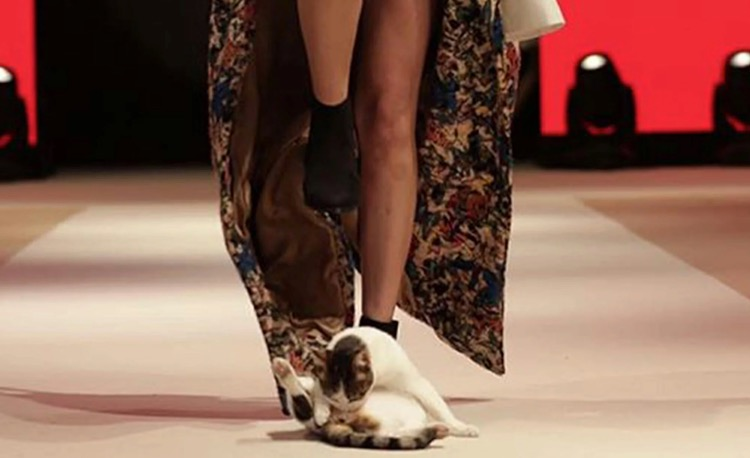 Cat walks runway