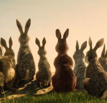 James McAvoy Leads a Star-Studded Rabbit Rebellion in the First Trailer for Watership Down 1