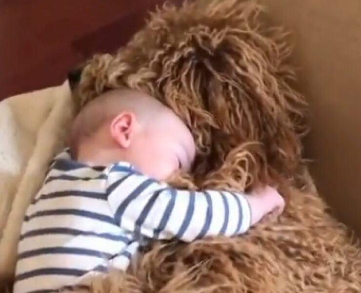 Baby and Dog Hug