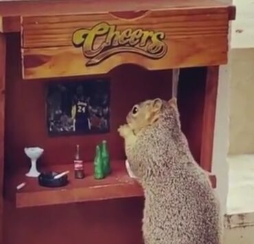 A squirrel at the Cheers Bar
