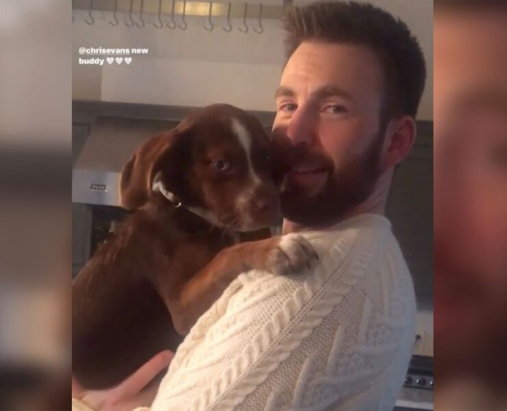 Chris Evans puppy