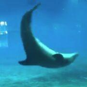 Cartwheeling dolphins
