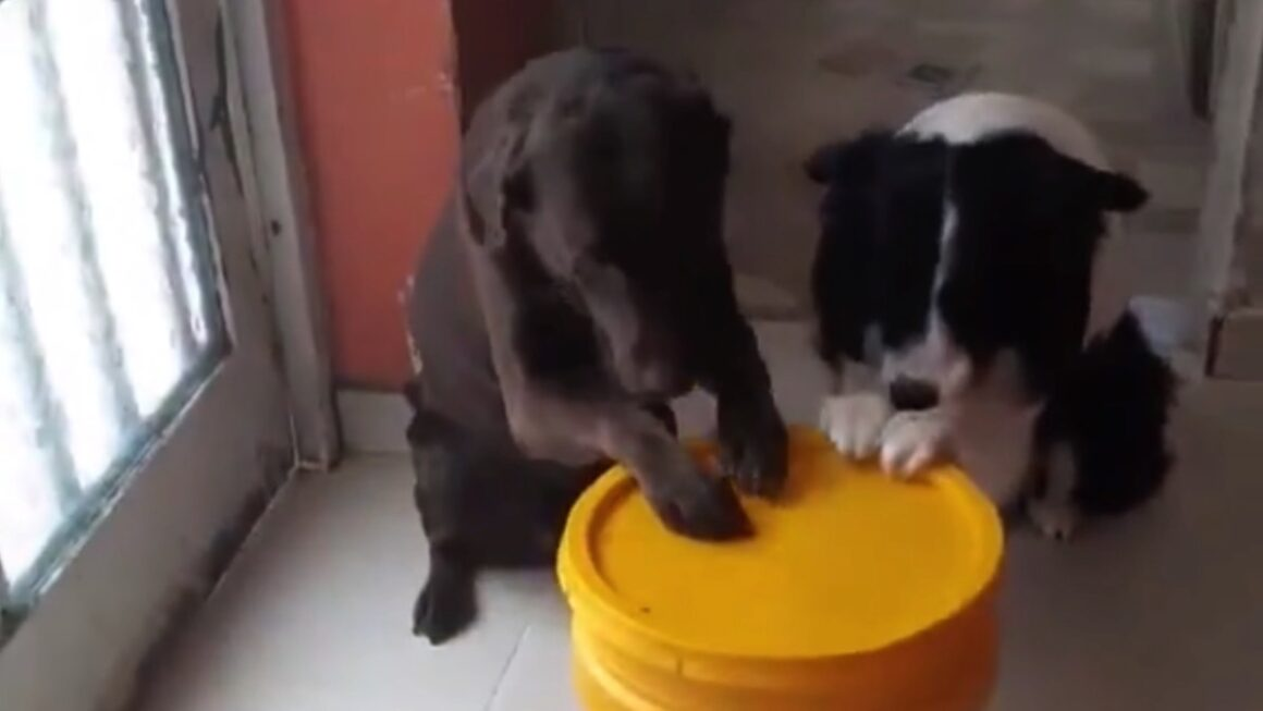 Dogs say a little prayer before their meal