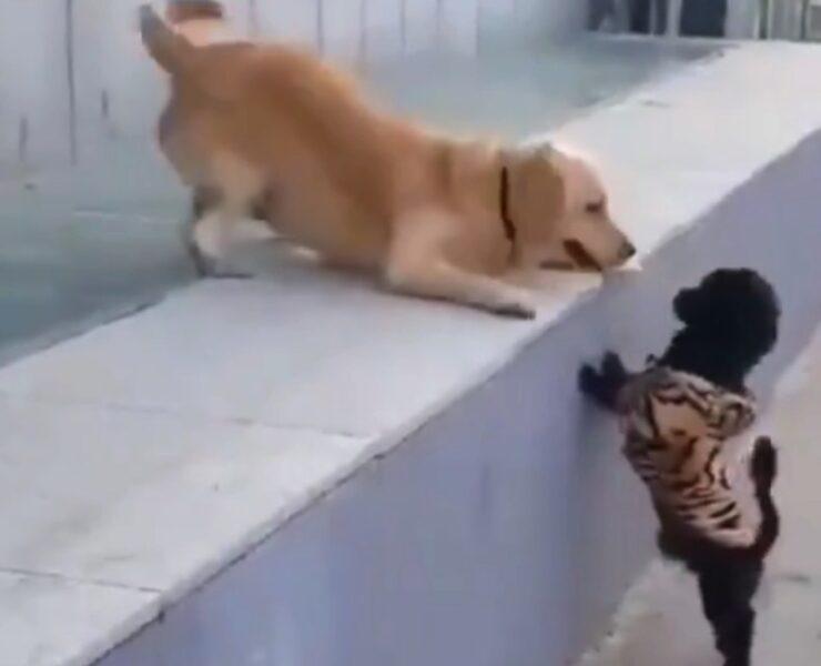 Dog enjoys his first kiss