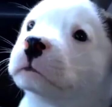 This puppy is NOT happy he has the hiccups