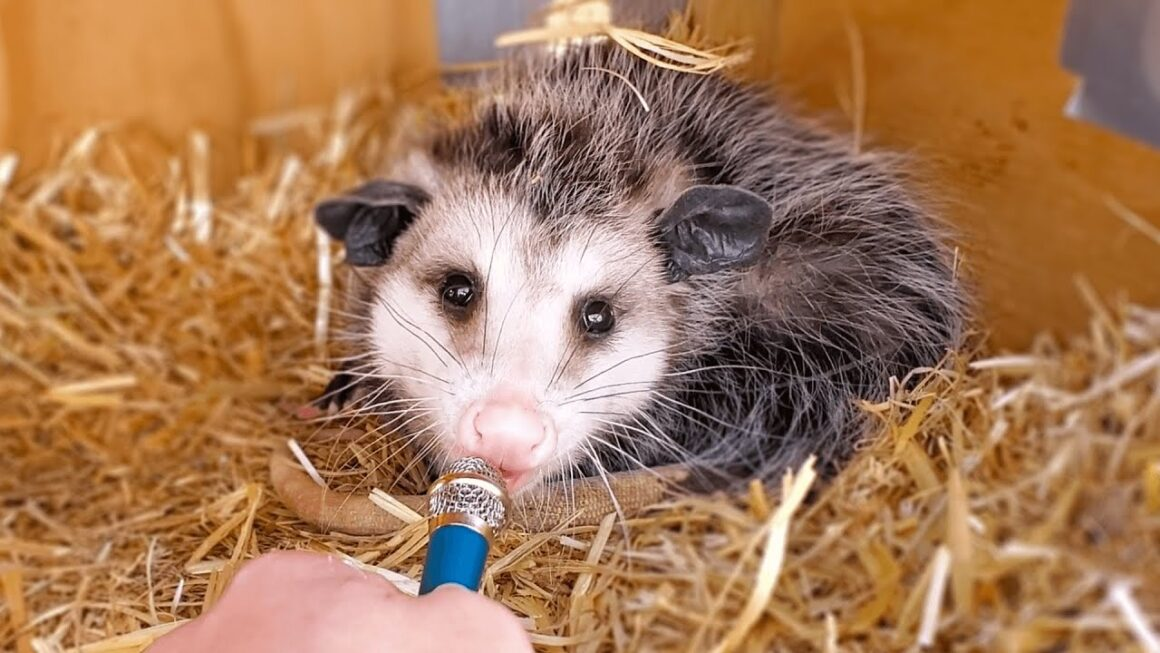 Interviewing animals with a tiny mic